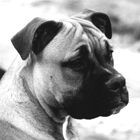 Pet portraits in colour or black and white